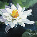 Lily In Water 2 by Judith Reidy