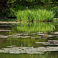 Lily Pads At Giverney by Eric Tressler