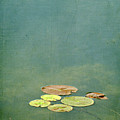 Lily Pads by Francois Dion