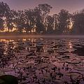 Lily Pads In The Fog by Dan Wells