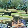 Lily Pond by Brad Cox