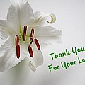 Lily Thank You 2 by Nick Kloepping