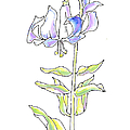 Lily Watercolor Drawing 5 by Gordon Punt
