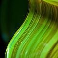 Lime Curl Ll by Dana Kern
