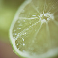 Lime by Samantha Wesselhoft Photography