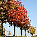 Line Of Autumn Trees by Christiane Schulze Art And Photography