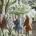 Linnaeus And De Jussieu, Botanists by Sheila Terry