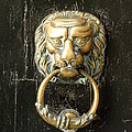 Lion Door Knocker by Lainie Wrightson
