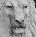Lion In Stone by Rob Hans