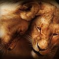 Lioness Love by Georgiana Romanovna