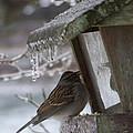 Little Bird by Katie OKeefe