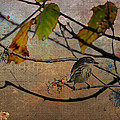 Little Bird by Todd Hostetter