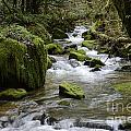 Little Creek 2 by Bob Christopher