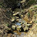Little Creek by Charlotta Ball