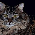Little Girl - Maine Coon Cat Painting by Patricia Barmatz