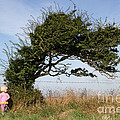Little Girl And Wind-blown Tree by Mark Taylor