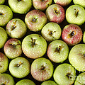 Little Green Apples by James BO  Insogna