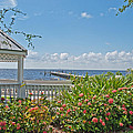 Little Harbor Tampa Bay by John Black