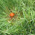 Little Orange Mushroom by Deborah McCoy