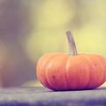 Little Pumpkin by Amy Tyler