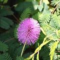Little Purple Bloom by James Johnson