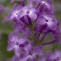 Little Purple Flowers by Jiayin Ma