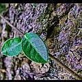 Little Vine by Debbie Portwood