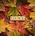 Live-autumn by  Onyonet  Photo Studios