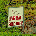 Live Bait Sign by Debbie Portwood