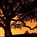 Live Oak- Cemetery- Natchez Mississippi by Doug Duffey