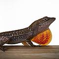 Lizard Portrait by Marx Broszio