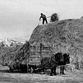 Loading Hay by Arthur Rothstein