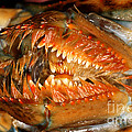 Lobster Mouth by Ted Kinsman