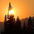 Lodgepole Sundown by Kurt Holtzen