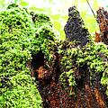 Log Moutain by Duwayne Washington