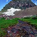 Logan Pass View by David Buhler