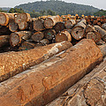 Logged Timber From The Tropical by Cyril Ruoso