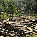 Logs In Logging Area, Danum Valley by Thomas Marent