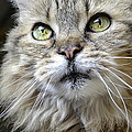 Lolas Whiskers by Fraida Gutovich