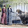 London Zoo, 1891 by Granger