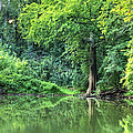 Lone Cypress by Larry Braun