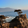 Lone Cypress by Paul Beckelheimer