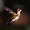Lone Hummingbird by Doug Sturgess