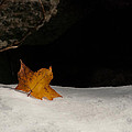 Lone Leaf by Tobey Brinkmann