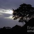 Lone Oak 1 by Jim And Emily Bush