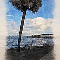 Lone Palm Tree by Joan  Minchak