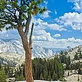 Lone Pine At Half Dome by LeeAnn McLaneGoetz McLaneGoetzStudioLLCcom