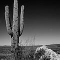 Lone Saguaro by Chad Dutson