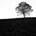 Lone Tree Black And White Silhouette by John Farnan