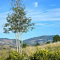 Lone Tree Colorado by Sarah Gayle Carter